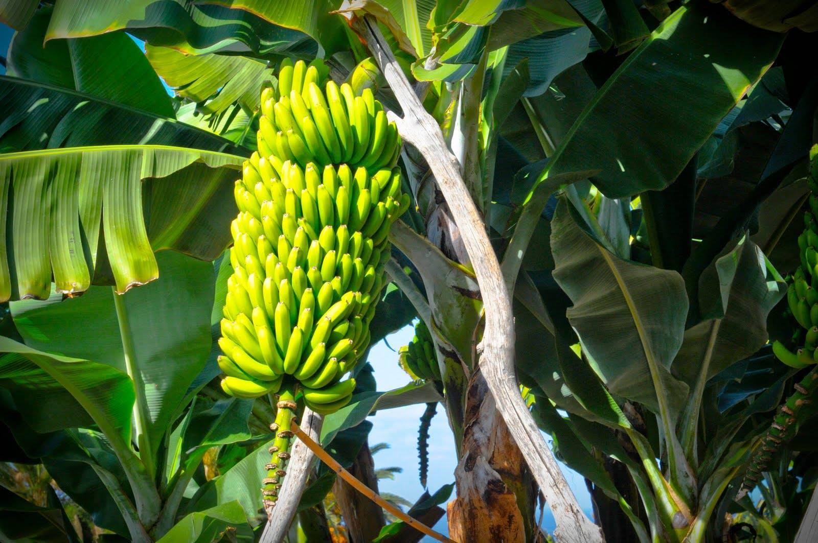 Los bioestimulantes se utilizan y actúan desde que germina la semilla hasta que madura el fruto, siendo importante conocer cuáles son los óptimos para cada fase de desarrollo.