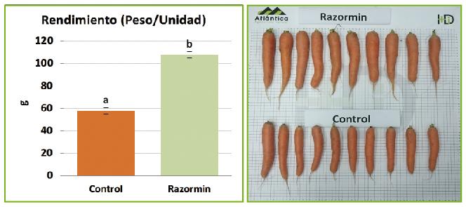 RAZORMIN, el bioestimulante aliado para tus cultivos